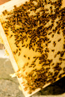 July 18, 2013 - Best Bees - 018