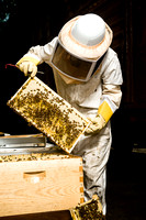 July 18, 2013 - Best Bees - 004