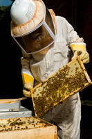 July 18, 2013 - Best Bees - 009