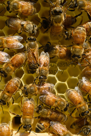 July 18, 2013 - Best Bees - 020